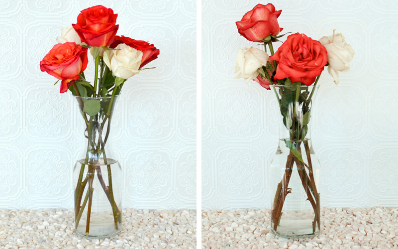 How To Keep Roses Alive