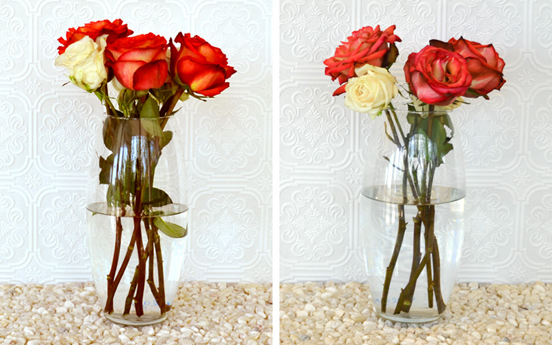 How To Keep Roses Alive More Com