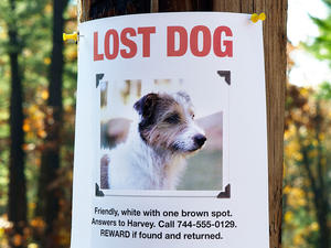Your Best Bets for Finding a Lost Pet