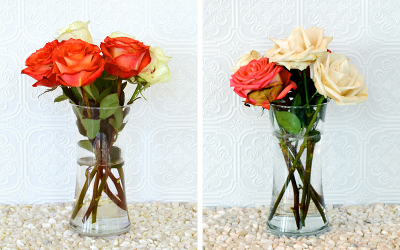 How To Keep Roses Alive More